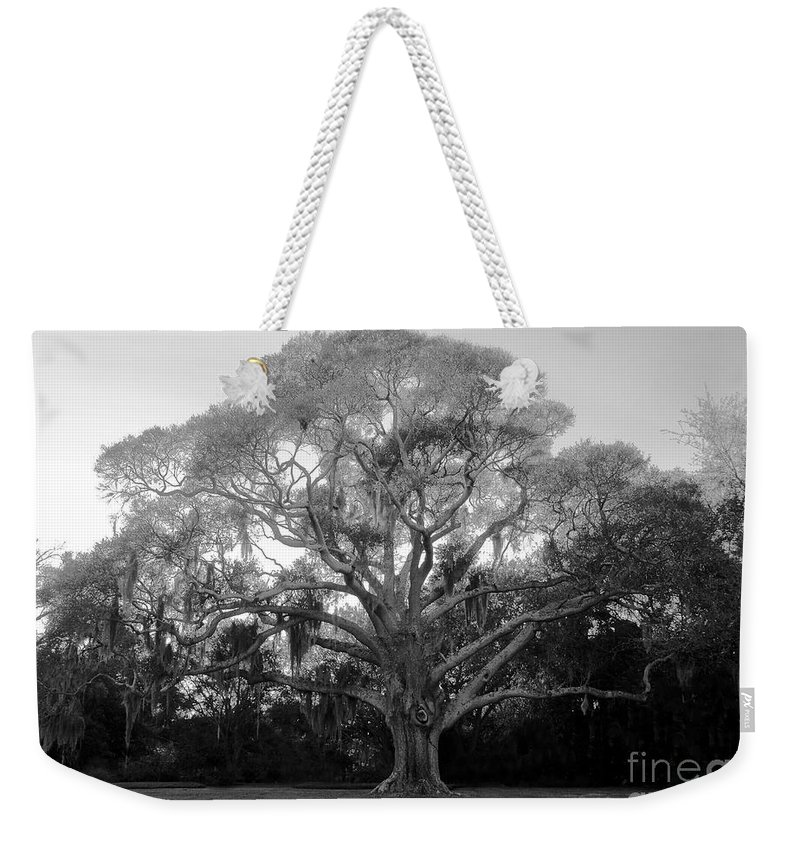 Oak Tree Weekender Tote Bag featuring the photograph Oak Tree by David Lee Thompson