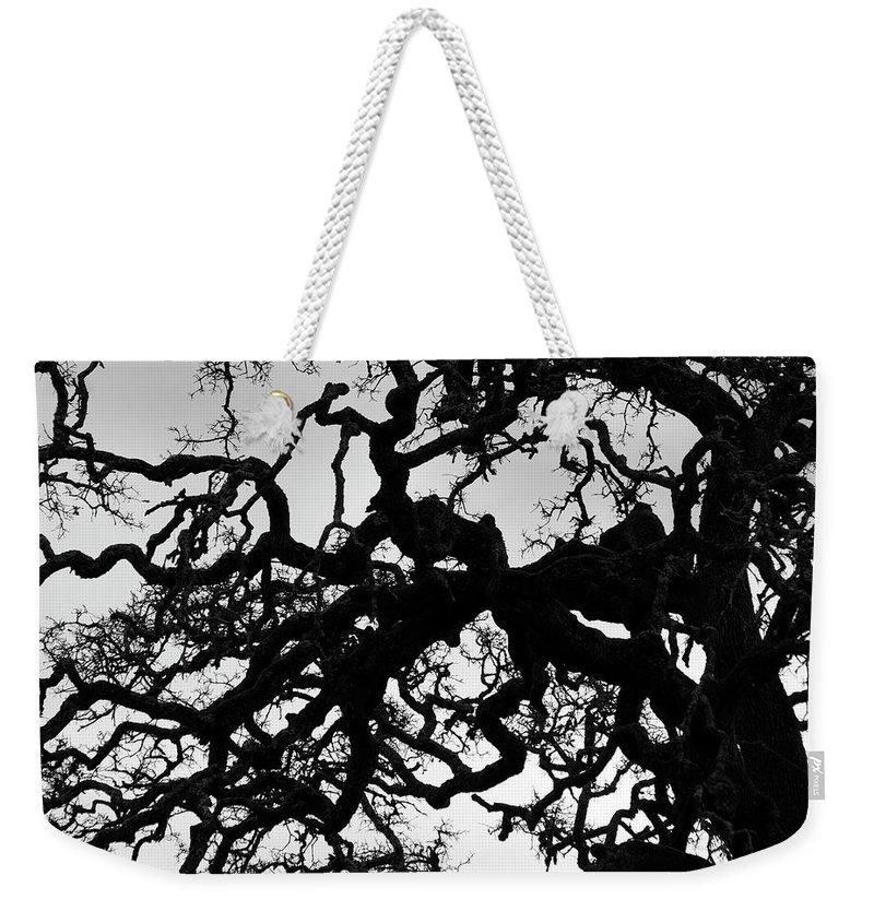 Oak Weekender Tote Bag featuring the photograph Oak Tree In Winter Detail - Amador County, California by Steve Ellison
