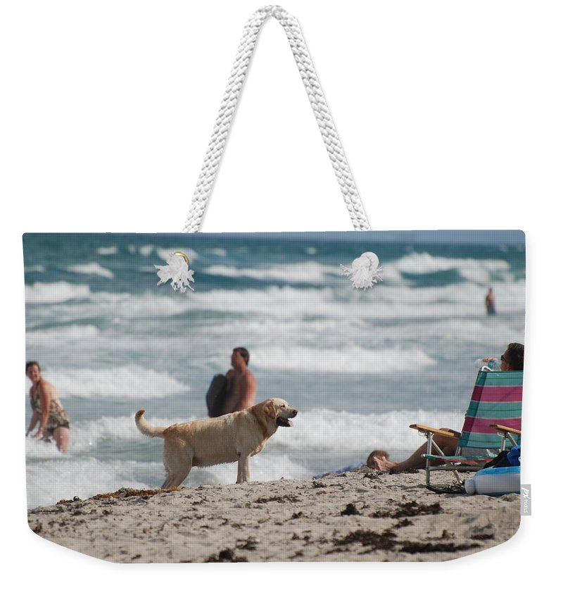 Waves Weekender Tote Bag featuring the photograph Ocean Dog by Rob Hans