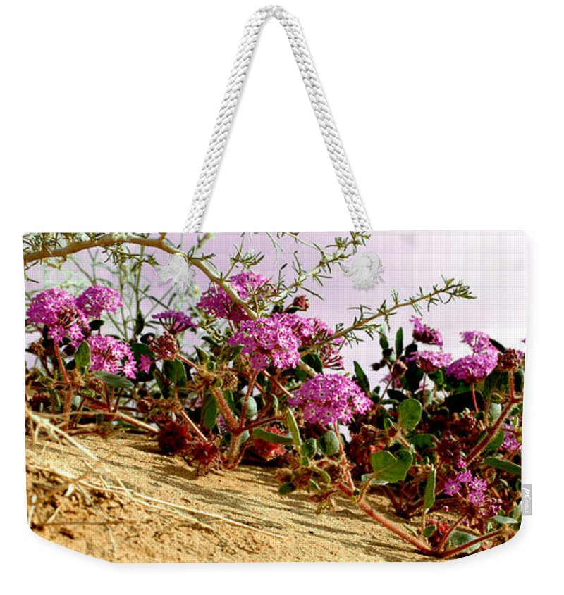 Ocotillo Wilds Weekender Tote Bag featuring the photograph Ocotillo Wilds by Chris Brannen