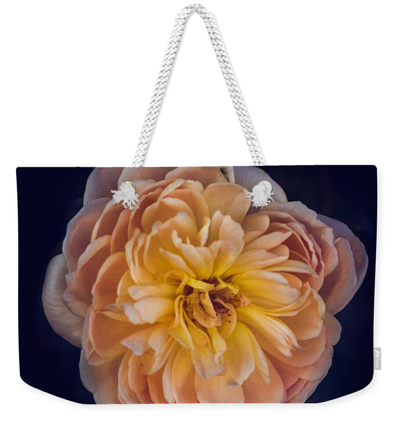 Perennial Weekender Tote Bag featuring the photograph October Rose by Robert Bales