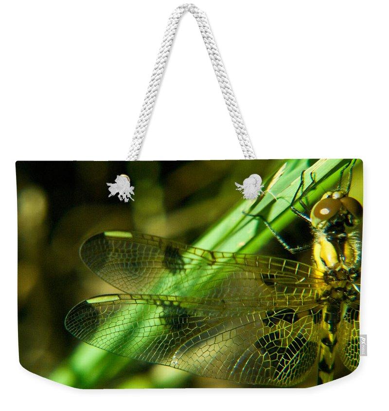 Odanata Weekender Tote Bag featuring the photograph Odanate Wing by Douglas Barnett