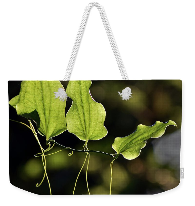 Insects Weekender Tote Bag featuring the photograph Of Veins And Tendrils by Skip Willits