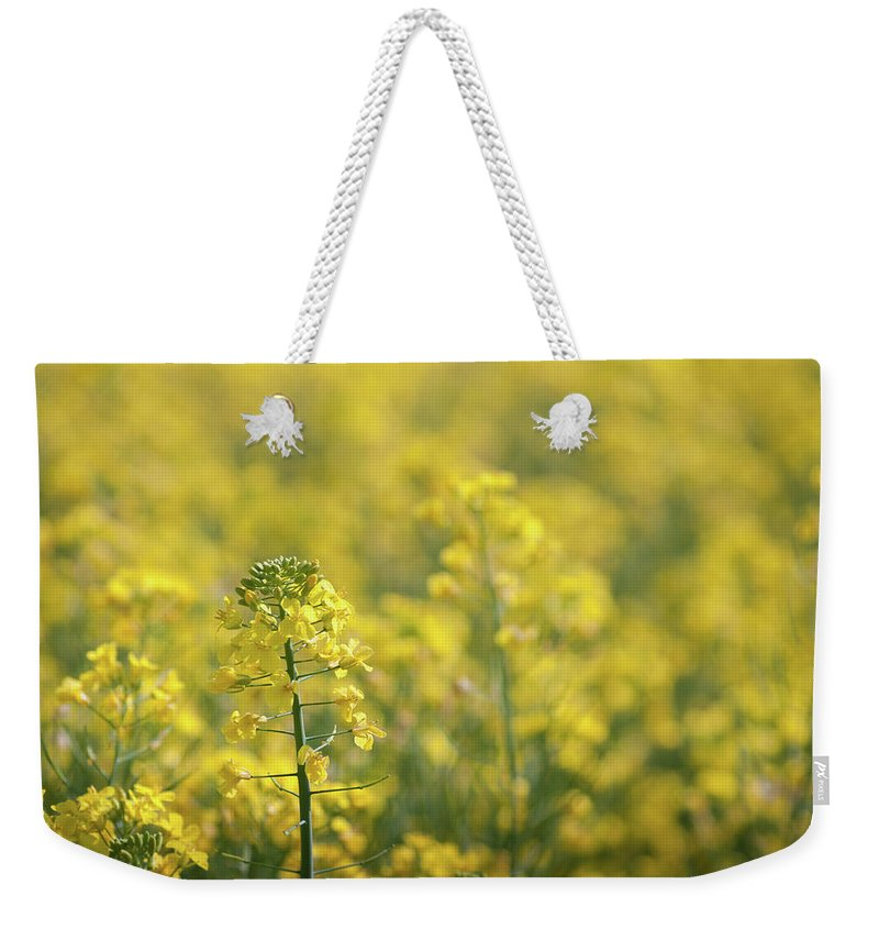 Countryside Weekender Tote Bag featuring the photograph Oilseed Rape by Linda Cooke