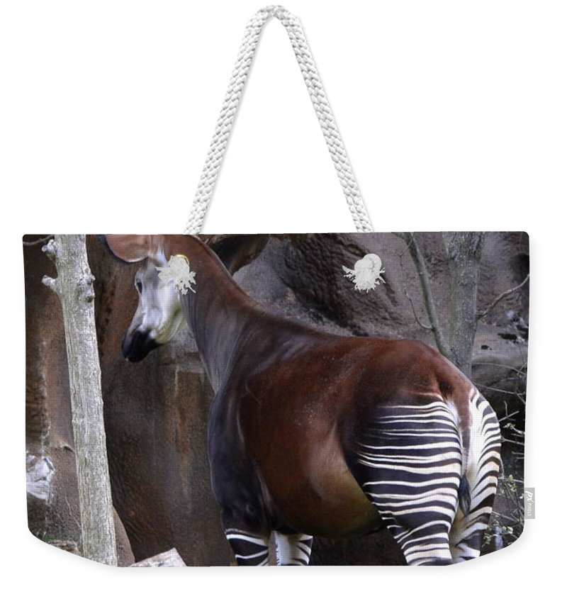Forest Giraffe Weekender Tote Bag featuring the photograph Okapi by Kathy Barney