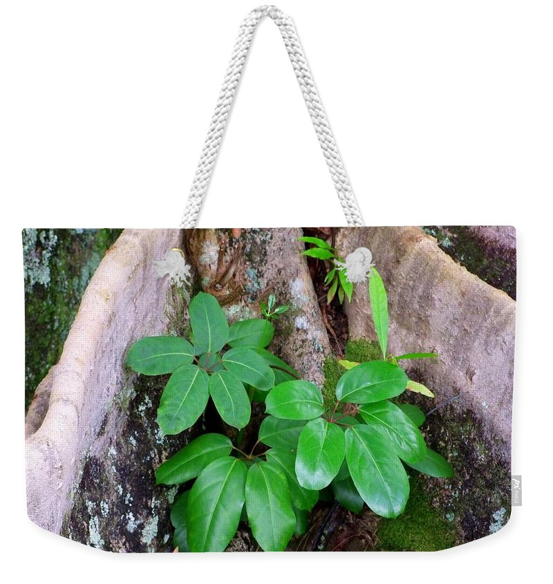 Green Weekender Tote Bag featuring the photograph Old Life New Life by Mary Deal