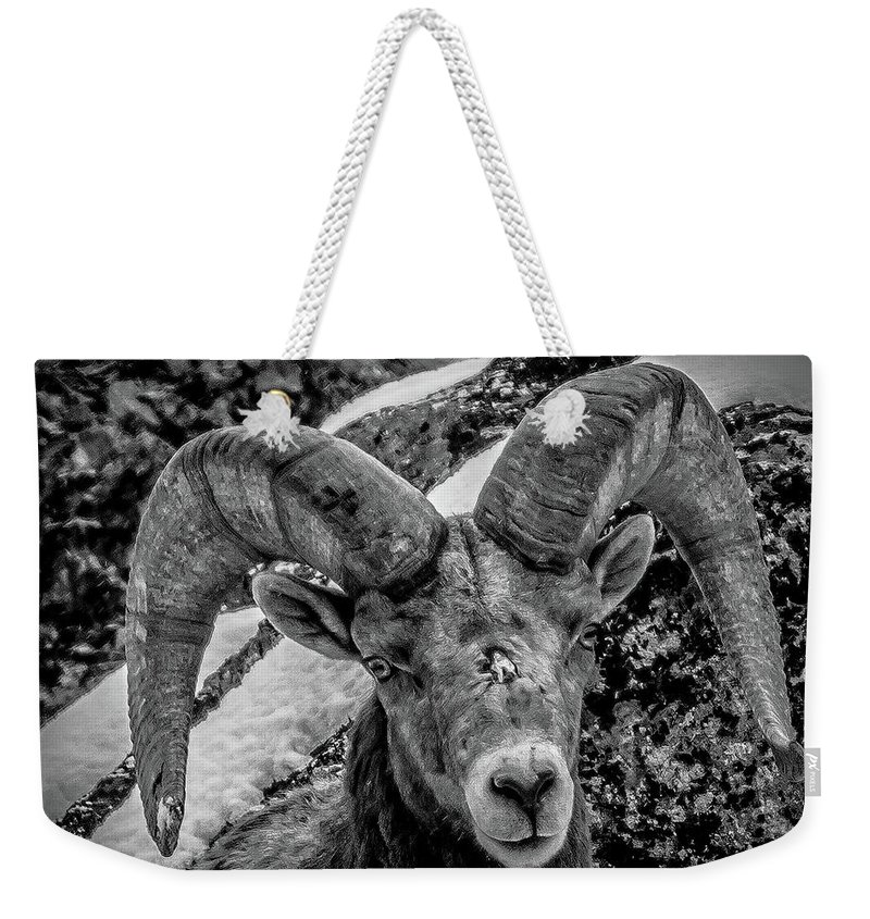 Wild Sheep Weekender Tote Bag featuring the photograph Old Ram by Jason Brooks