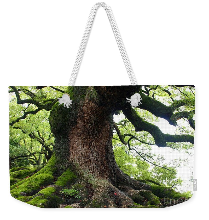 Tree Weekender Tote Bag featuring the photograph Old Tree In Kyoto by Carol Groenen