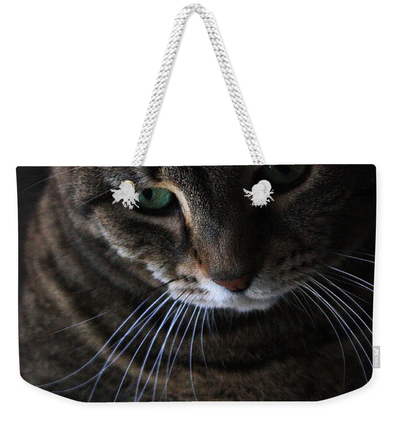 Cat Weekender Tote Bag featuring the photograph Ole Green Eyes by Joe Kozlowski