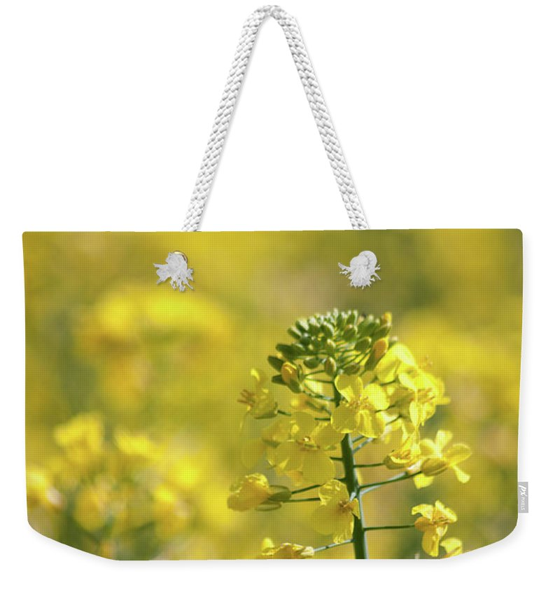 Countryside Weekender Tote Bag featuring the photograph Oliseed Rape by Linda Cooke