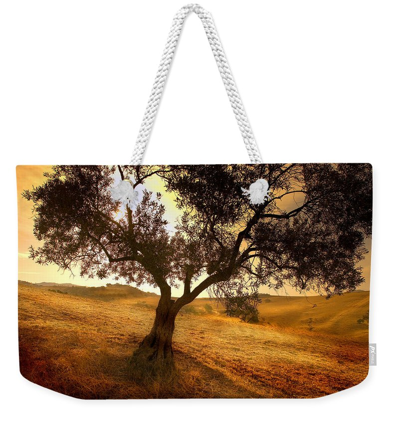 Landscape Weekender Tote Bag featuring the photograph Olive Tree Dawn by Mal Bray