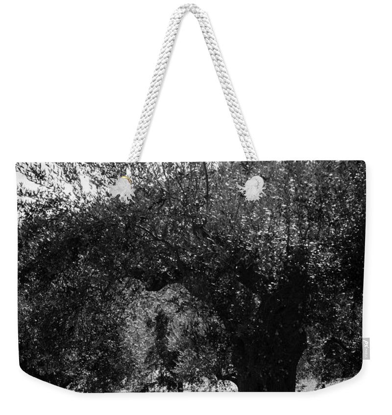 Olive Trees Weekender Tote Bag featuring the photograph Olive Trees In Italy 2 by Andrea Mazzocchetti