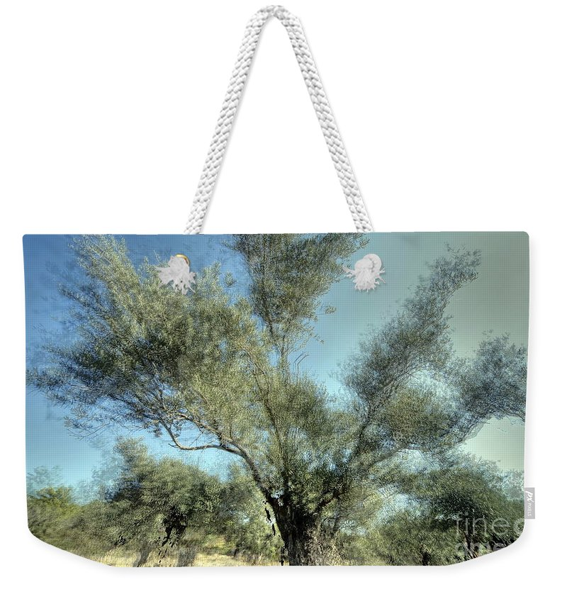 Olive Weekender Tote Bag featuring the photograph Olive Trees by Vladi Alon