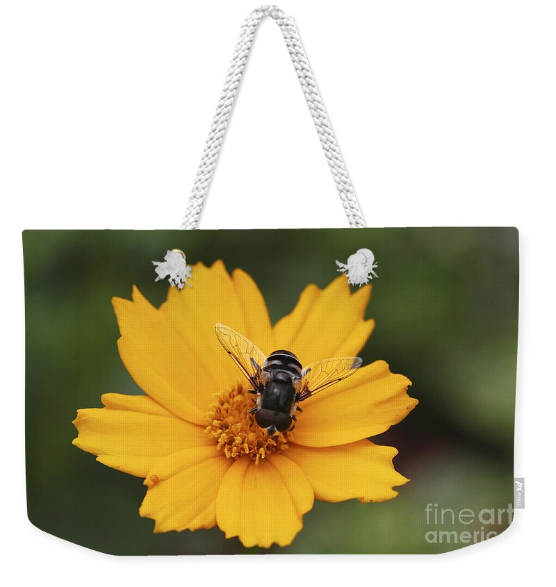 Macro Weekender Tote Bag featuring the photograph On A Buttery Cloud by Deborah Benoit
