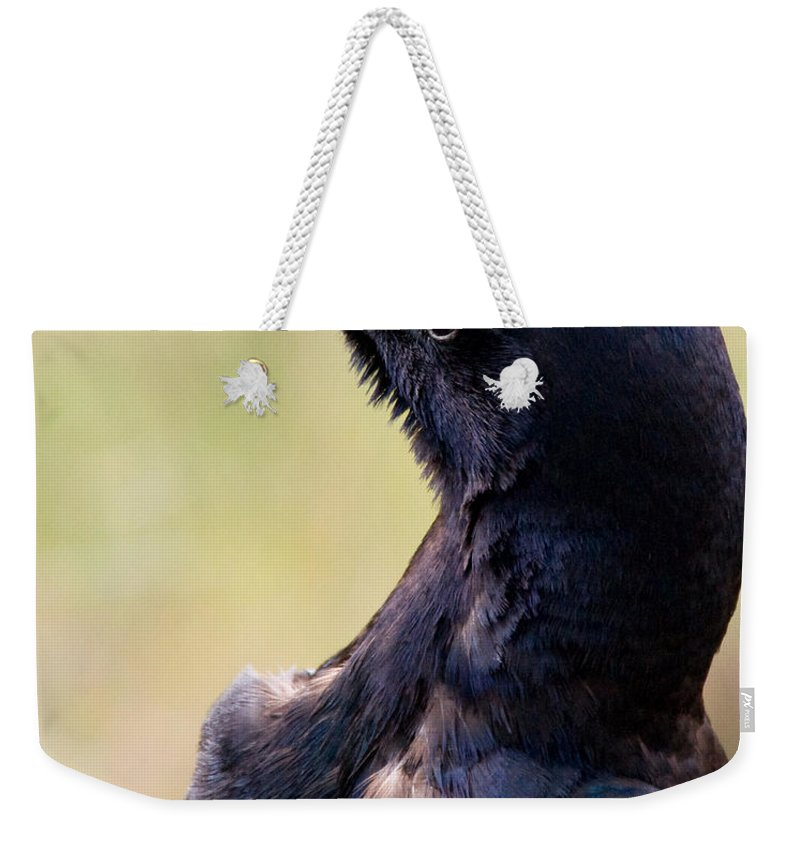 Bird Weekender Tote Bag featuring the photograph On Alert by Christopher Holmes