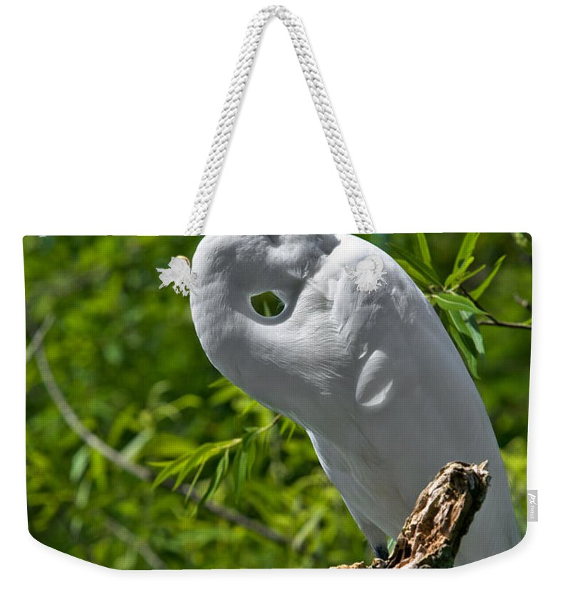 Bird Weekender Tote Bag featuring the photograph On Break by Christopher Holmes