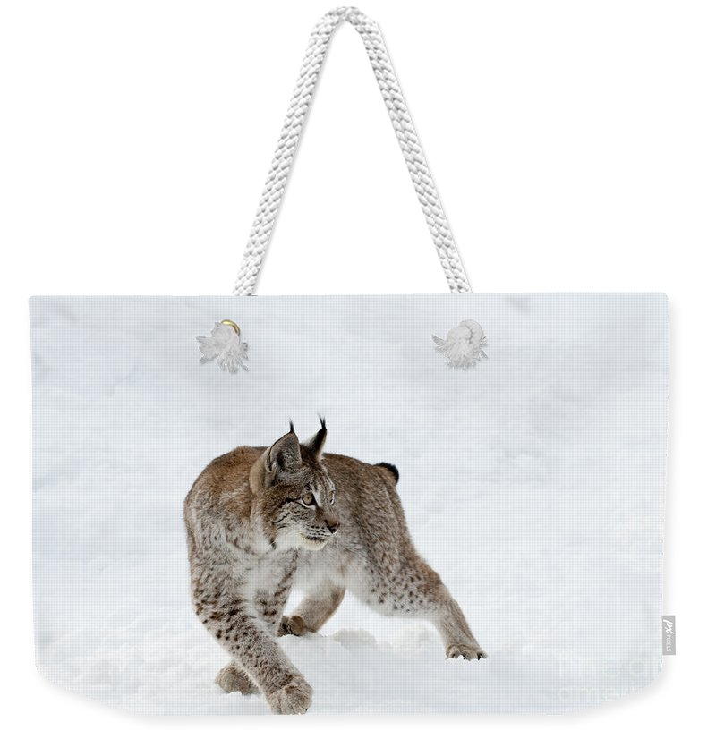 Lynx Weekender Tote Bag featuring the photograph On High Alert by Sandra Bronstein