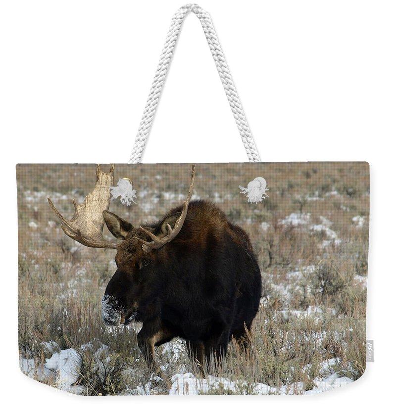 Moose Weekender Tote Bag featuring the photograph On His Way by DeeLon Merritt