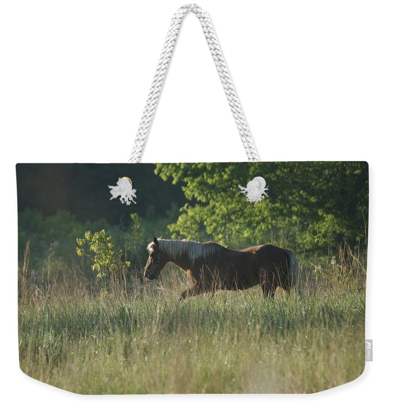 Horse Weekender Tote Bag featuring the photograph On My Own by Heidi Poulin