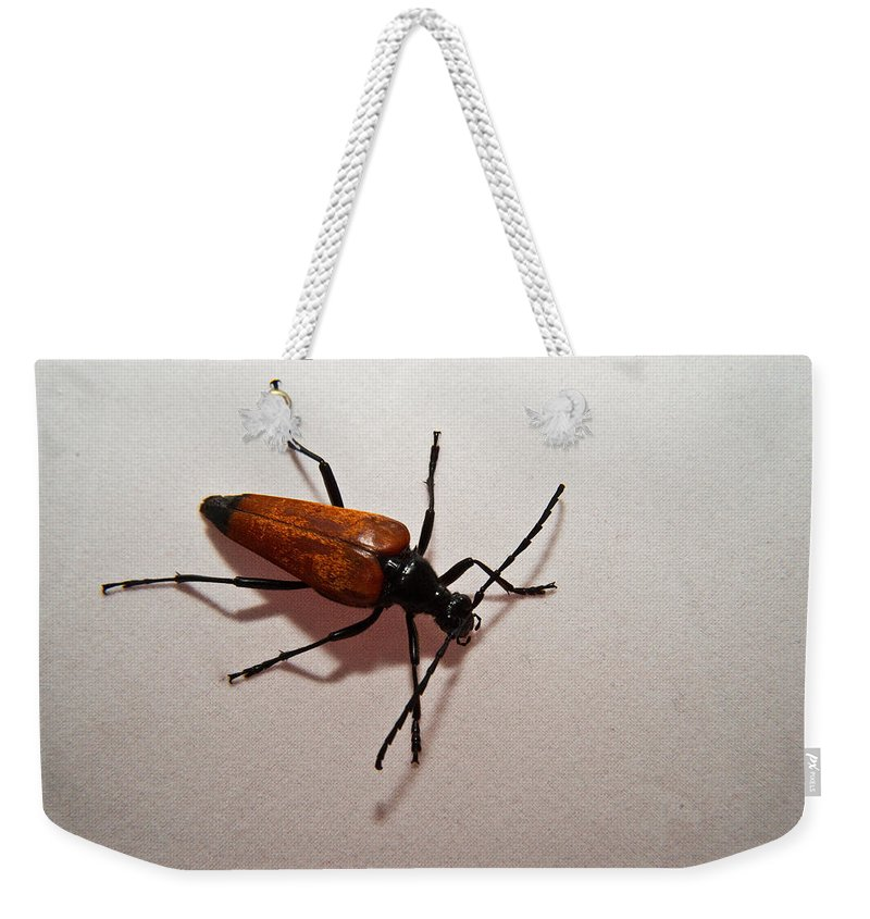 Cumberland Weekender Tote Bag featuring the photograph On My Way by Douglas Barnett