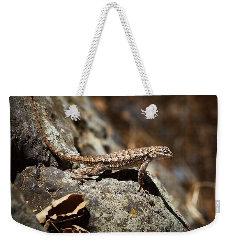 Western Fence Lizard Weekender Tote Bag featuring the photograph On The Look Out by Kelley King