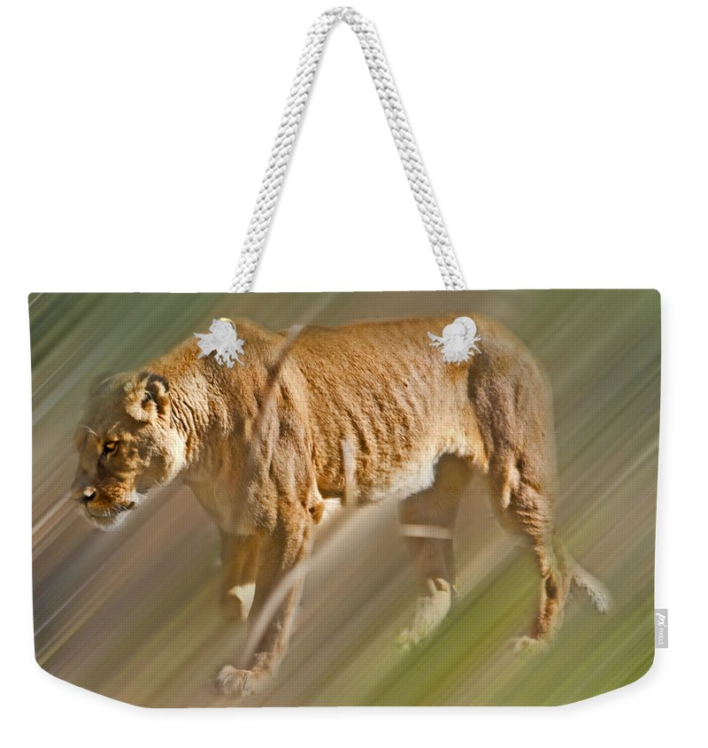 Lioness Weekender Tote Bag featuring the photograph On The Prowl by Miroslava Jurcik