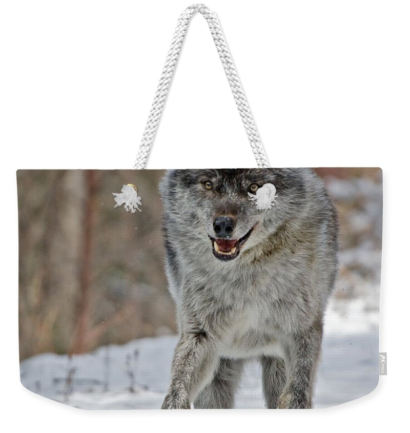 Wolf Weekender Tote Bag featuring the photograph On The Run by Colette Panaioti