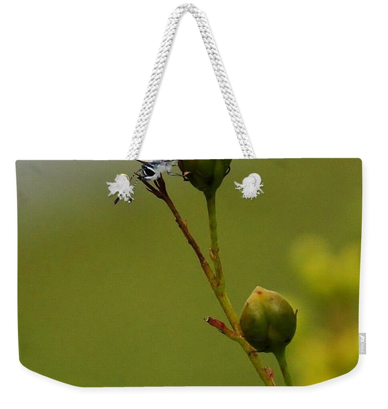 Butterfly Weekender Tote Bag featuring the photograph On The Tip by Lisa Renee Ludlum