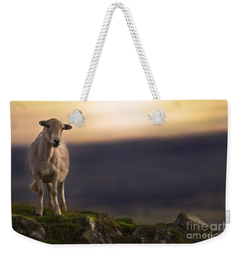 Sheep Weekender Tote Bag featuring the photograph On The Top Of The Hill by Angel Ciesniarska