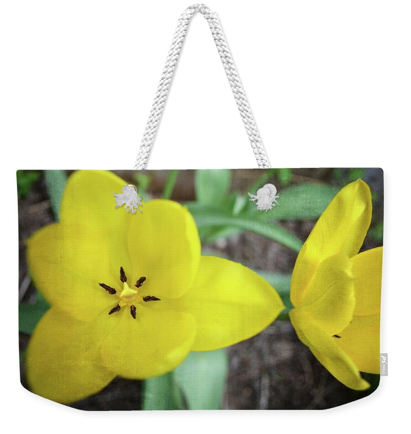 Hollander Weekender Tote Bag featuring the photograph One And A Half Yellow Tulips by Michelle Calkins