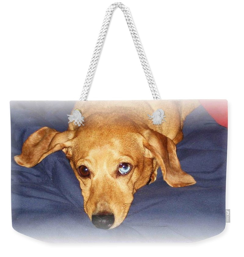 Dachshund Weekender Tote Bag featuring the photograph One Blue Eye by Nelson Strong
