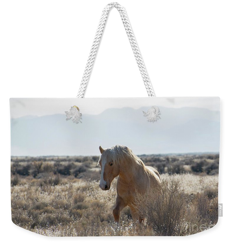 Nikon Weekender Tote Bag featuring the photograph One Ear Stallion by Nicole Markmann Nelson
