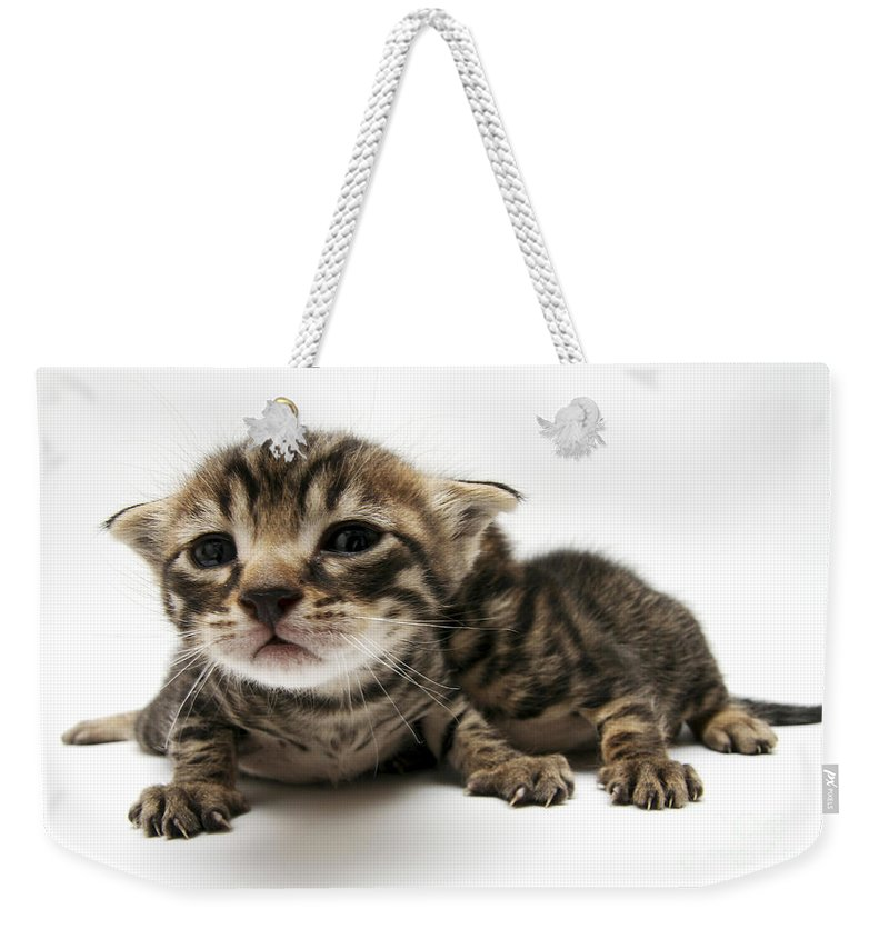 Cat Weekender Tote Bag featuring the photograph One Week Old Kittens by Yedidya yos mizrachi