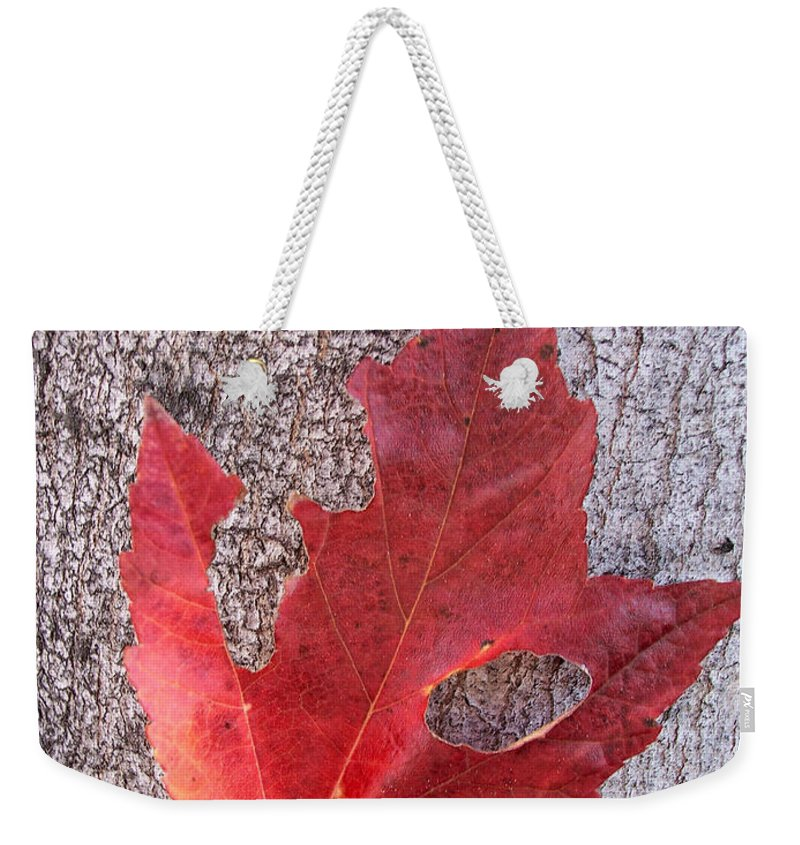Maple Leaf Weekender Tote Bag featuring the photograph Only One Leaf To Live by Donna Blackhall