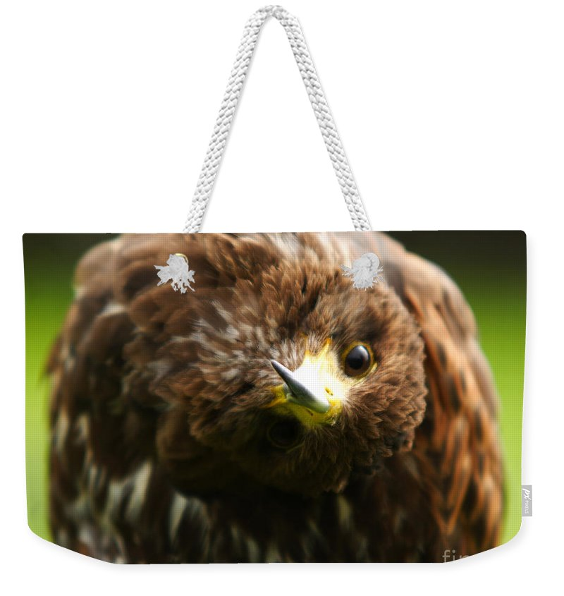 Buzzard Weekender Tote Bag featuring the photograph Oops I Have Gone Mad by Angel Ciesniarska