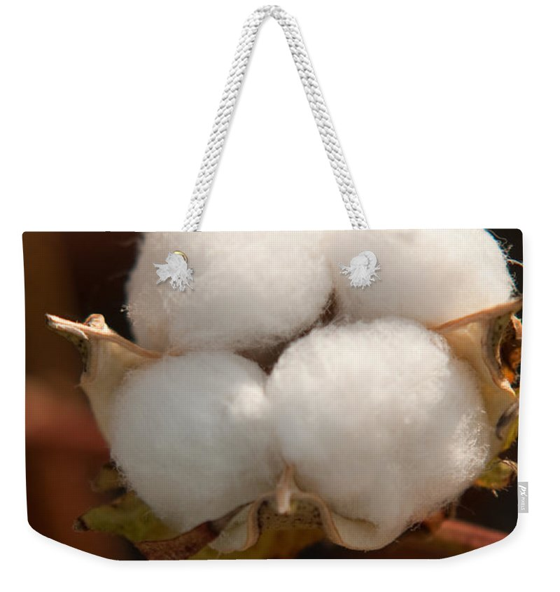 Cotton Weekender Tote Bag featuring the photograph Open Cotton Boll by Douglas Barnett
