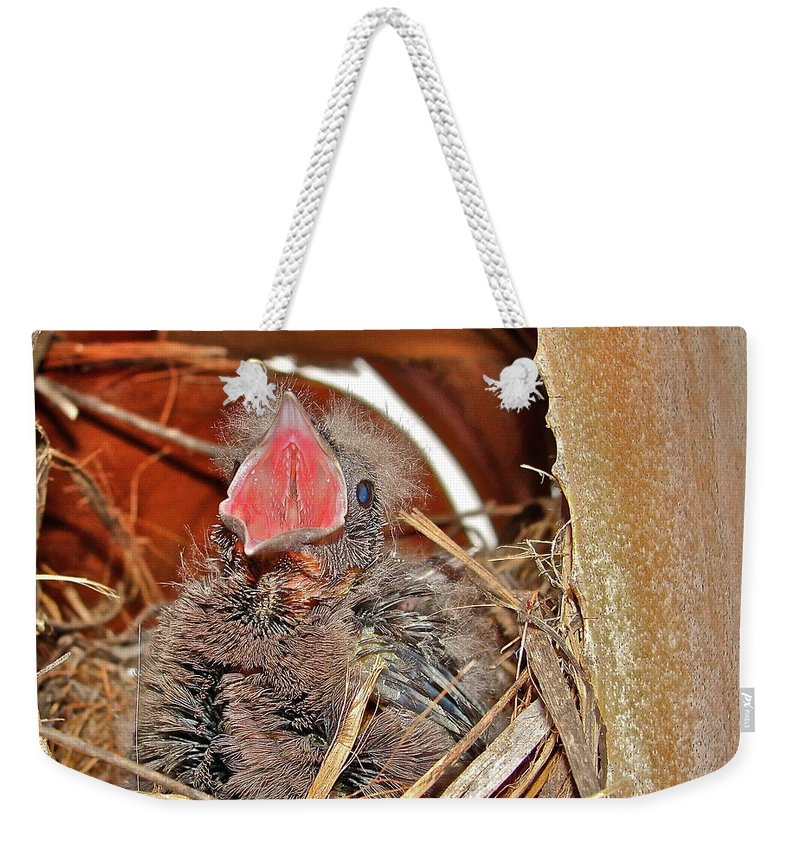 Bird Weekender Tote Bag featuring the photograph Open Wide by Diana Hatcher