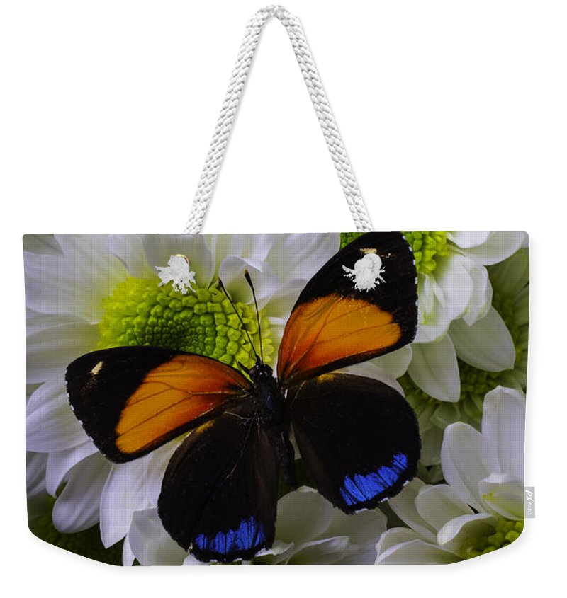 Mum Weekender Tote Bag featuring the photograph Orange Blue Butterfly On Poms by Garry Gay