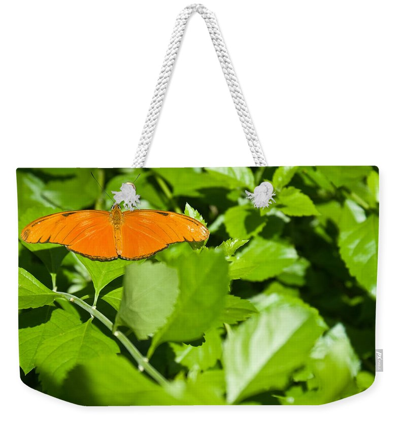 Orange Weekender Tote Bag featuring the photograph Orange Butterfly On Foliage by Douglas Barnett