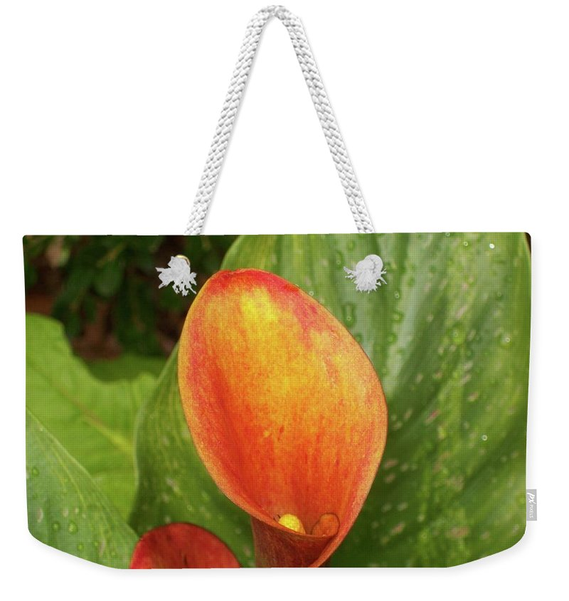 Calla Flower Weekender Tote Bag featuring the photograph Orange Calla Mix by Michael CrowderPhotography