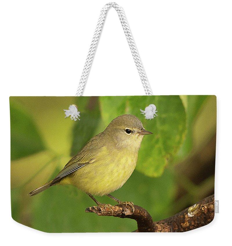 Bird Weekender Tote Bag featuring the photograph Orange Crowned Warbler by Dennis Hammer