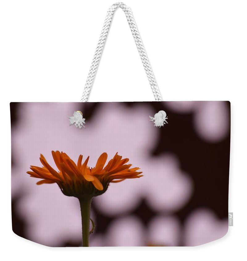 Flowers Weekender Tote Bag featuring the photograph Orange Daisey by Pam Meoli
