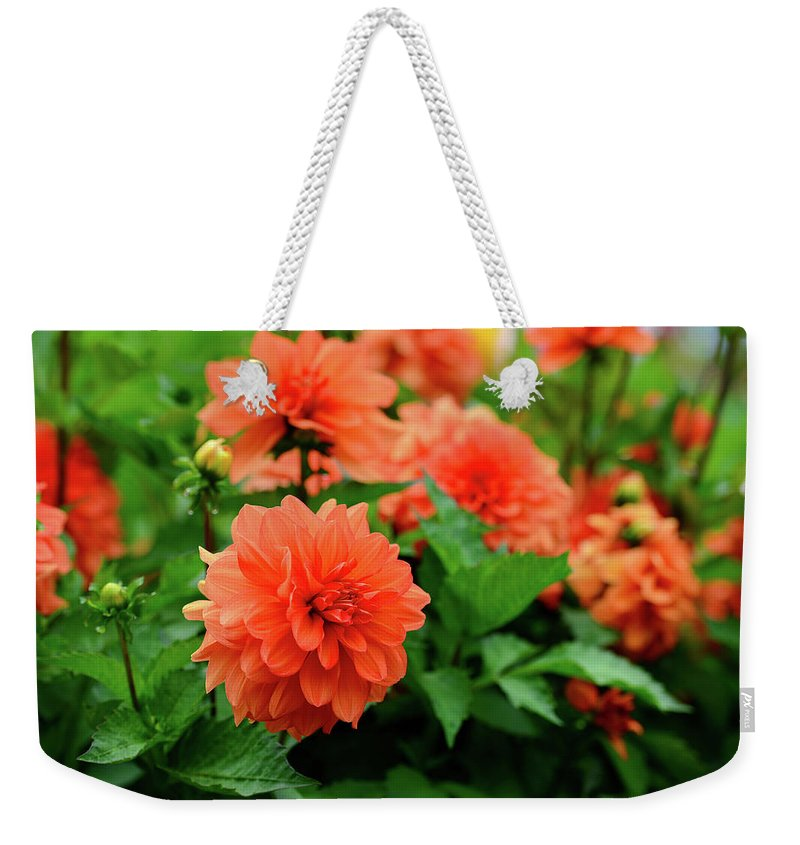 Flower Flowers Bloom Garden Dahlia Orange Spring Weekender Tote Bag featuring the photograph Orange Flowers by Clyn Robinson