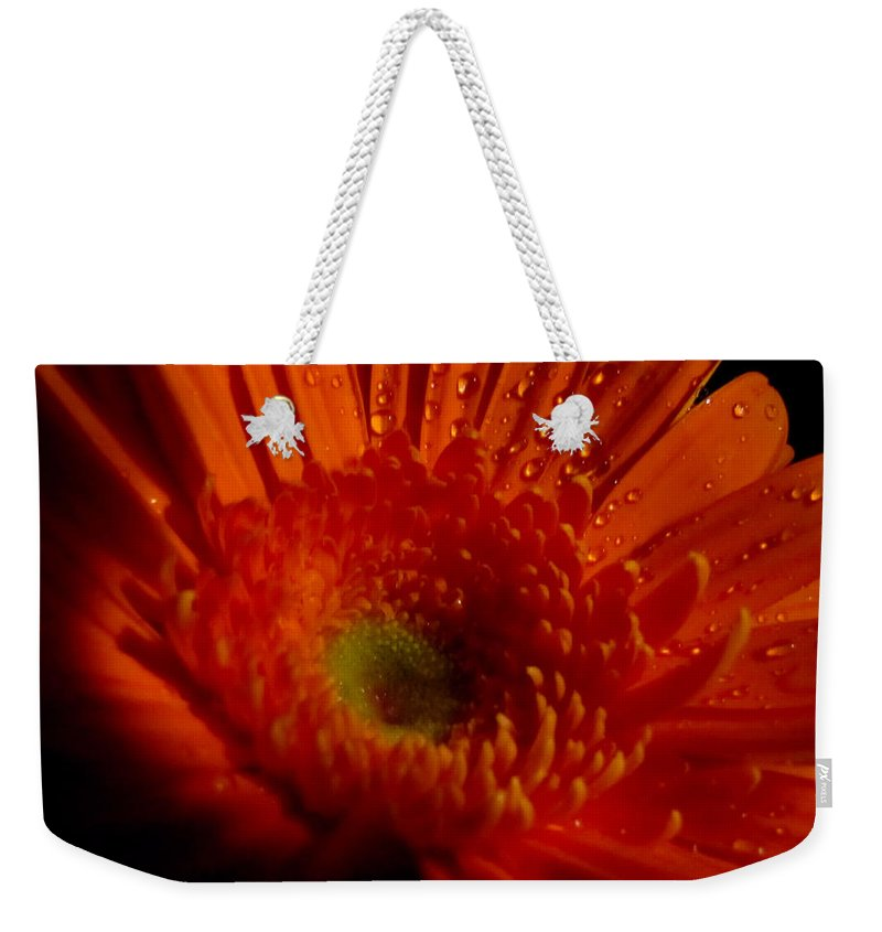 Macro Weekender Tote Bag featuring the photograph Orange Gerbera by September Stone