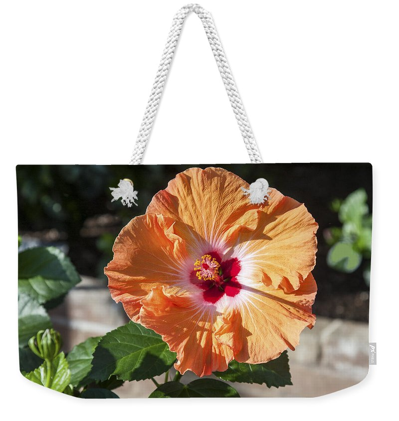 Light Orange Hibiscus Weekender Tote Bag featuring the photograph Orange Hibiscus by Sally Weigand