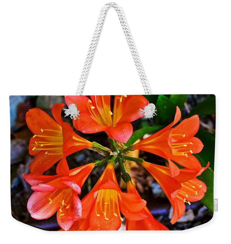Orange Trumpet Flowers At Pilgrim Place In Claremont Weekender Tote Bag featuring the photograph Orange Trumpet Flowers At Pilgrim Place In Claremont-california by Ruth Hager