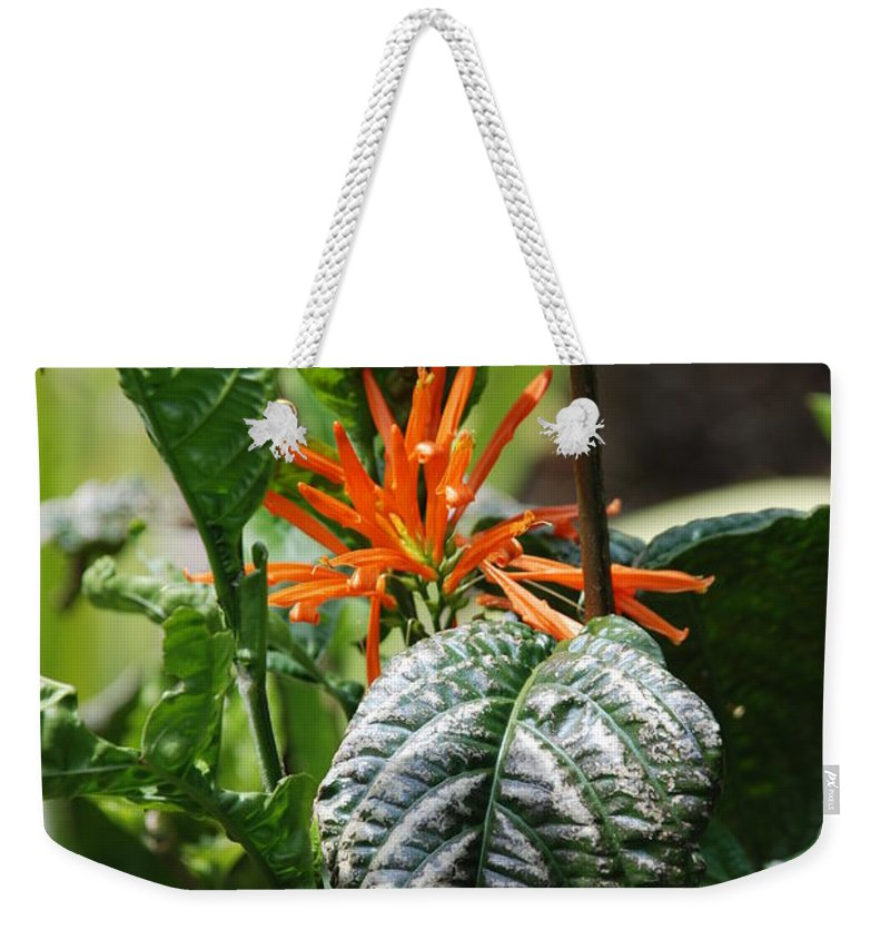 Banana Leaf Weekender Tote Bag featuring the photograph Orange Plants by Rob Hans
