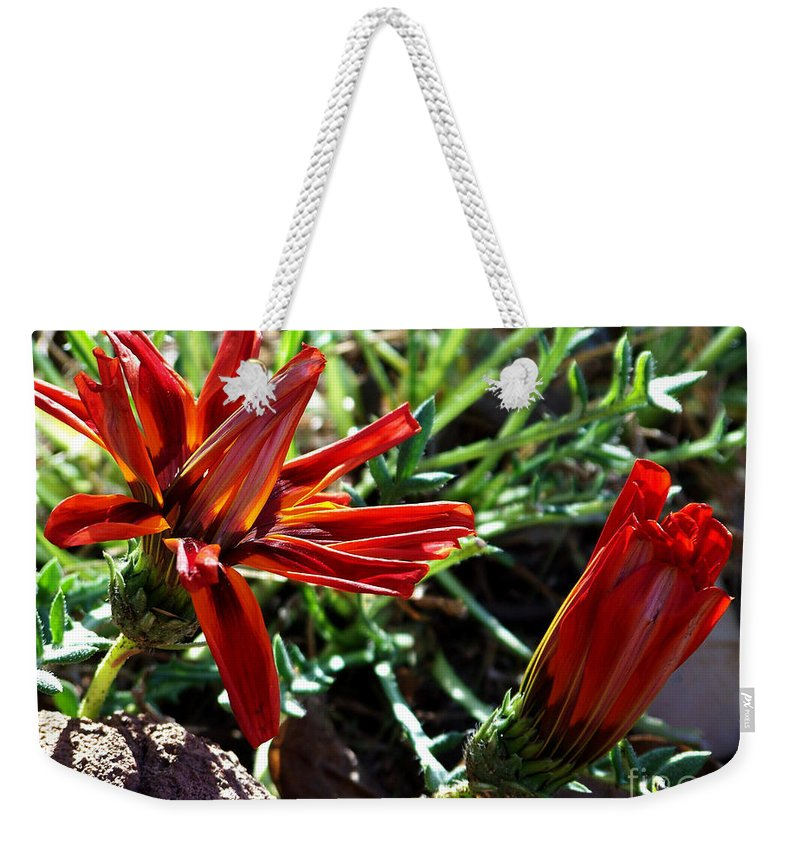 Gazania Weekender Tote Bag featuring the photograph Orange Power by Kathy McClure