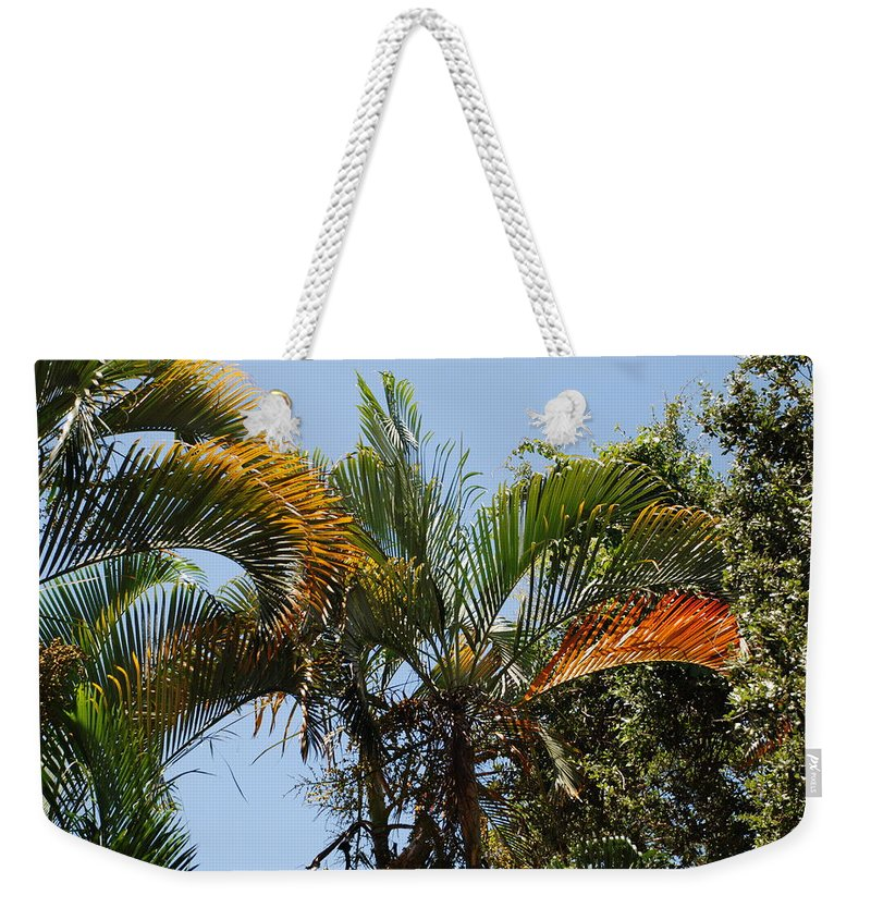 Palms Weekender Tote Bag featuring the photograph Orange Trees by Rob Hans