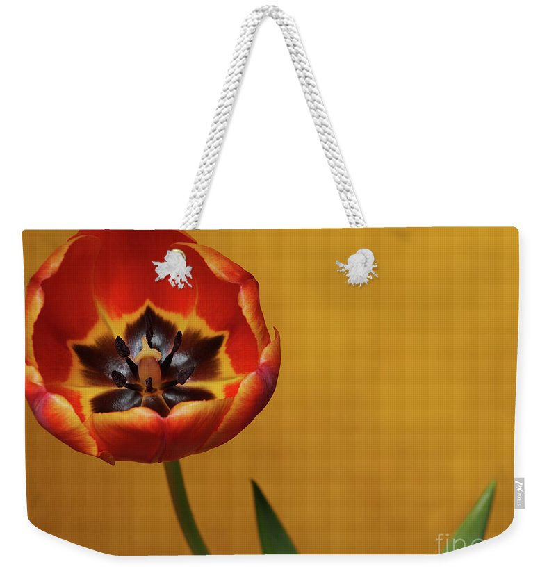 Flowers Weekender Tote Bag featuring the photograph Orange Tulip 2 by Dorothy Lee